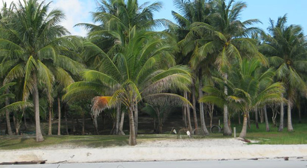 Coconutbeach Bungalows